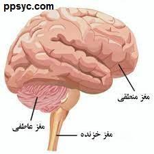 ما یک مغز داریم یا سه مغز؟
